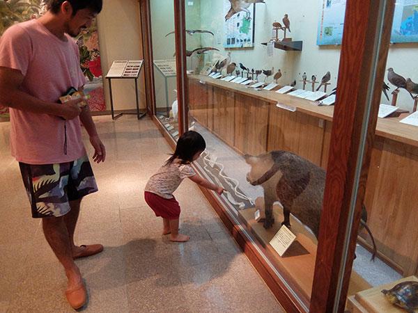 野生動物保護センターのイノシシの剥製