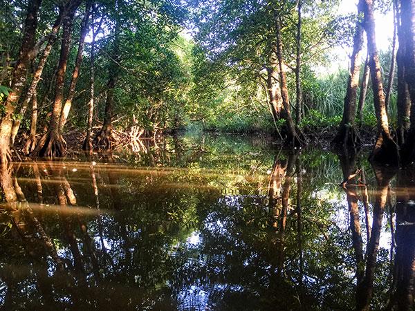 マングローブ川に朝日が差し込む