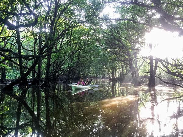 神秘的な朝のマングローブ川