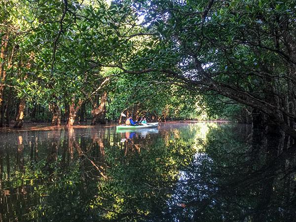 早朝カヌーで爽快に漕ぐ