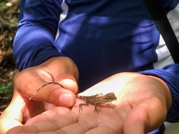 キノボリトカゲの赤ちゃん